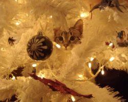 Animali domestici e feste natalizie – Fly Live con Valentina Giusti martedì 19 dicembre ore 11.00