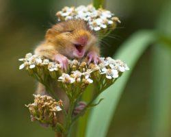 Natural Fly – sesta puntata: E' primavera! Attenzione agli animali