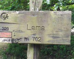 La foresta della Lama raccontata da Andrea Pignattelli, mercoledì 17 ottobre, ore 11.30
