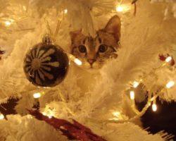 Natale senza rischi: i consigli per i nostri animali, martedì 18 dicembre, ore 11.00