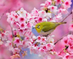 Vivaldi e la primavera, venerdì 19 aprile, ore 12.05