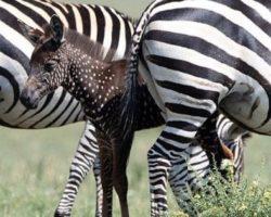 Una zebra a pois: torna l'appuntamento con NaturalFly, sabato 21 settembre, ore 11.05
