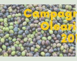 Coldiretti: Campagna olearia 2019, giovedì 14 novembre, ore 11.35